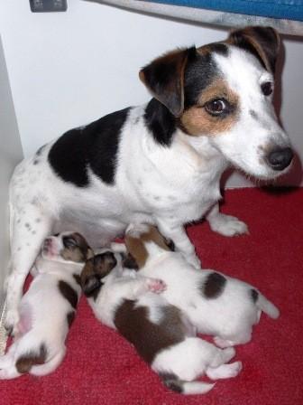 De pups zijn 2 weken