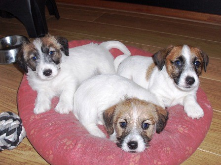 De pups zijn nu bijna 6 weken oud alweer, helaas vliegt de tijd...