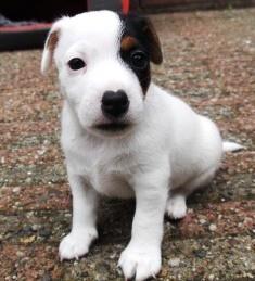 Tinka Bell 5 weken oud