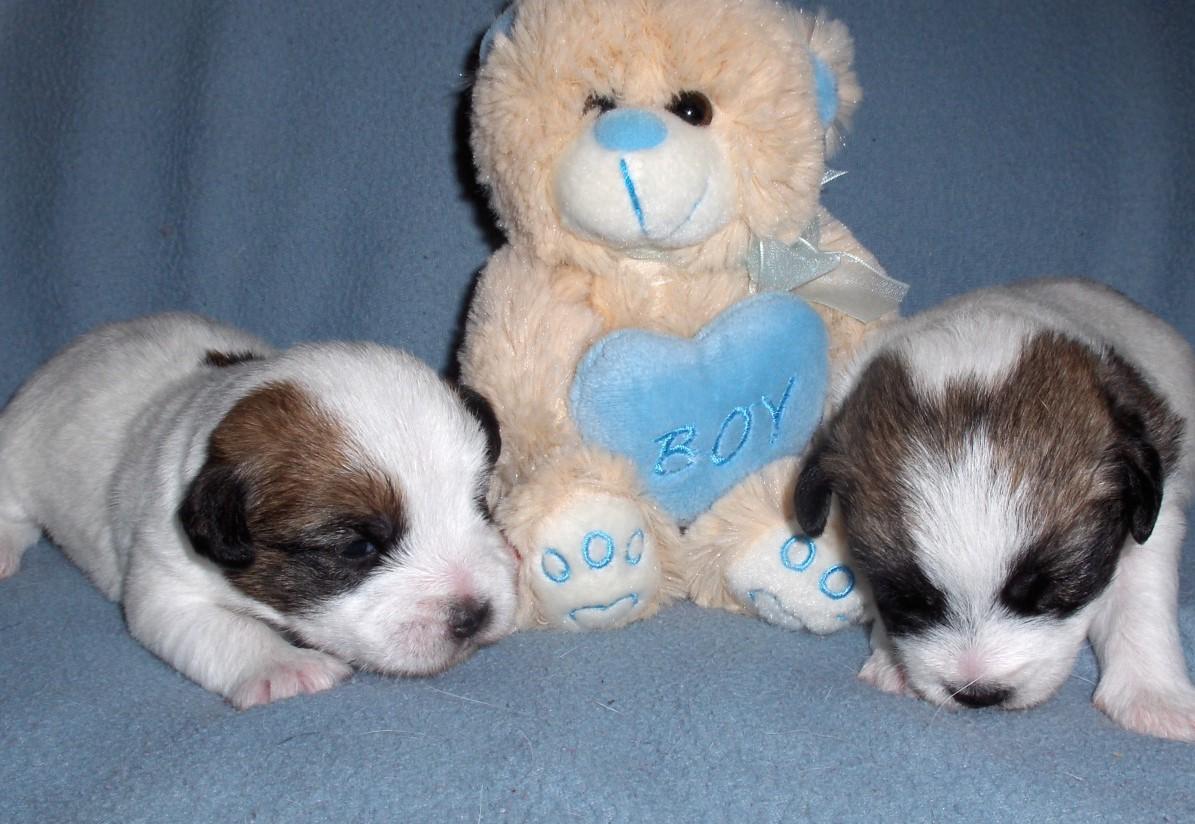 Bubba Jay en Blue Berry 2 weken oud