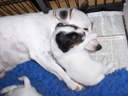 Tinka en Xandro Joe, 3 weken oud