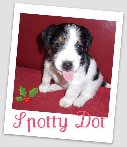 Spotty Dot 5 weken oud