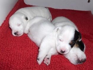 De pups doen het goed, ze zijn nu 2 weken oud