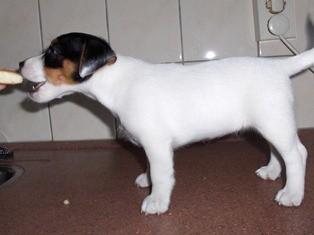 Tinka Bell 7 weken oud