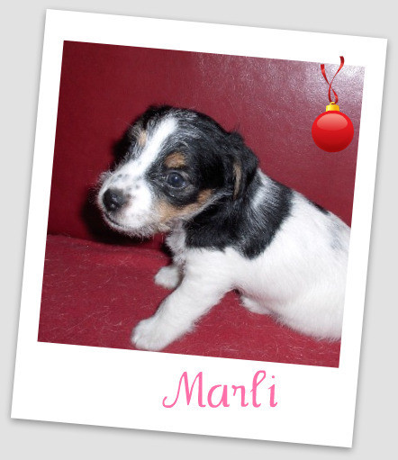 Marli 5 weken oud