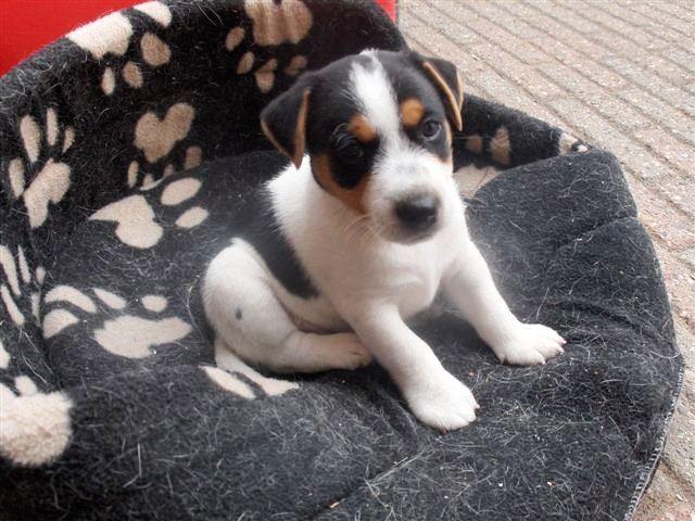 Rocky 6 weken oud