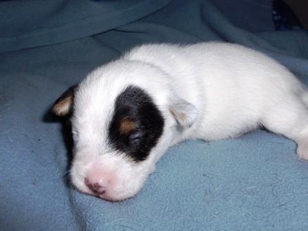 Xavi Jones, 2 weken oud