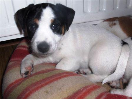 Diva, 7 weken oud