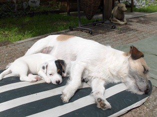 Sarah met de pups van Missy