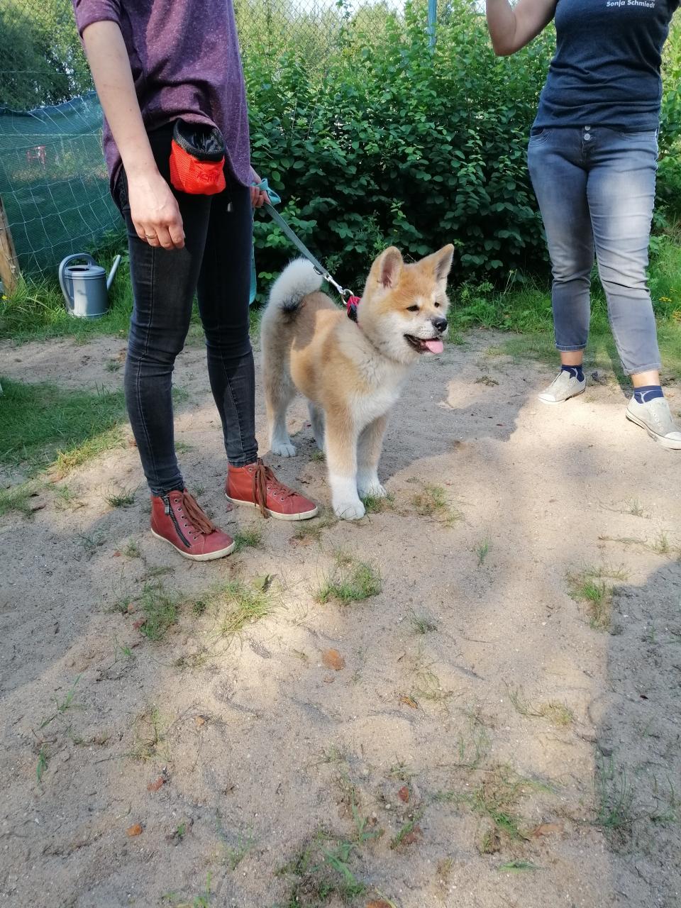 Jirou in der Hundeschule