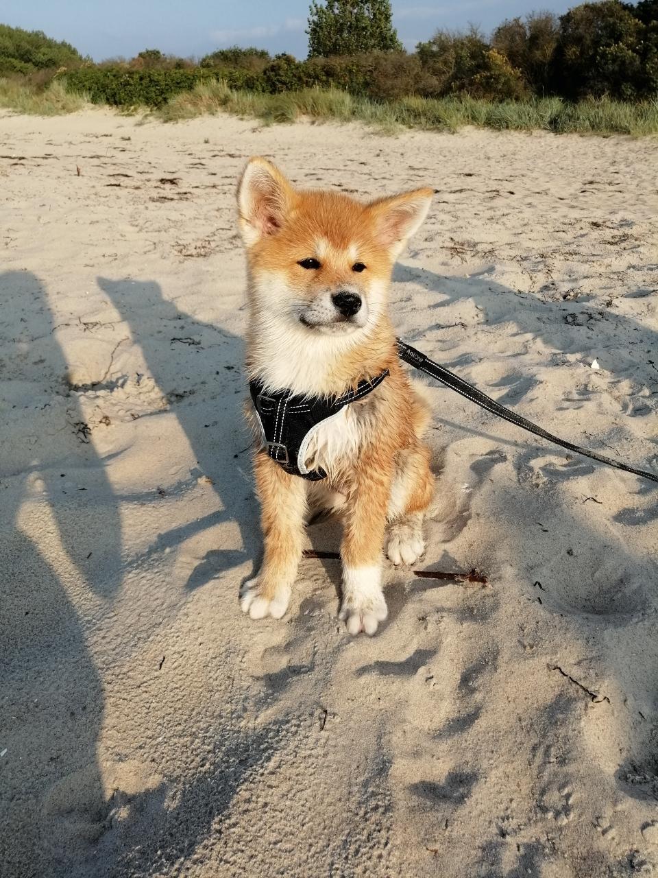 Yumiko an der Ostsee