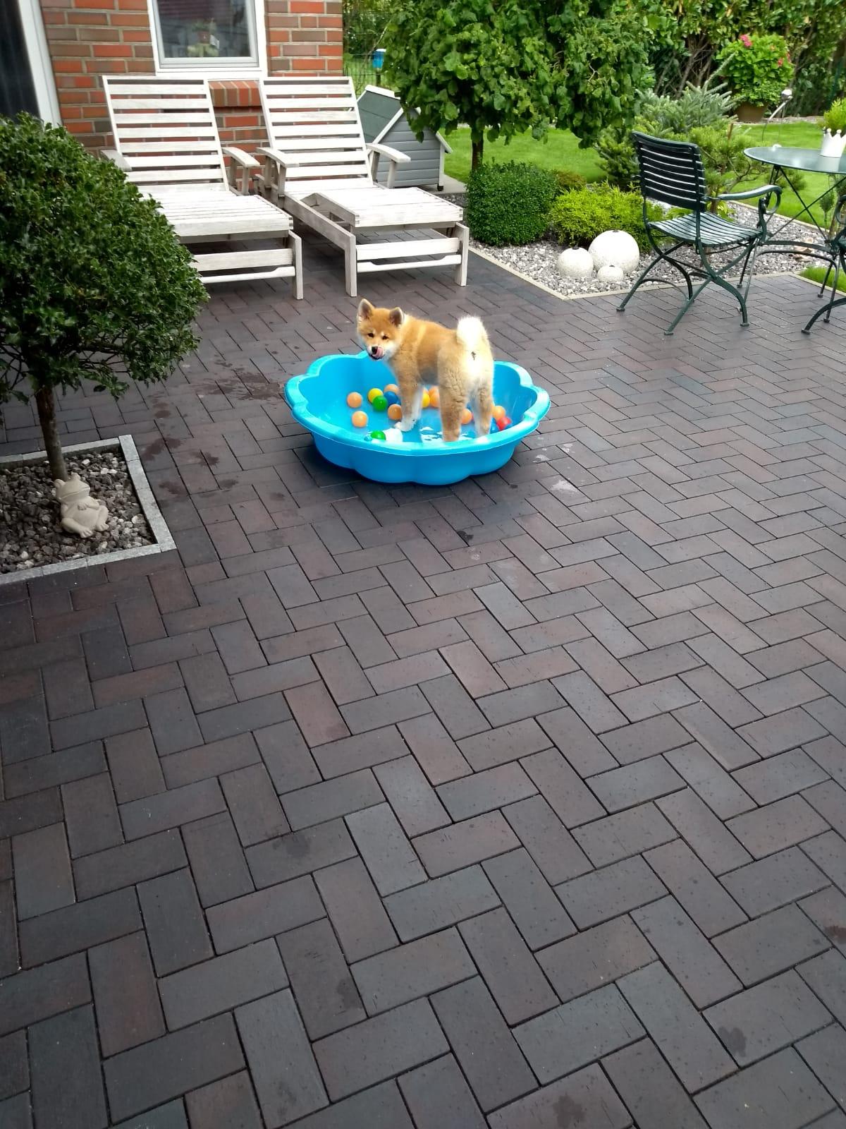 Wie ihre Geschwister findet sie Wasser toll