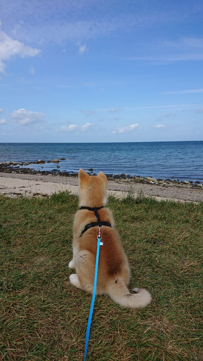 Maru an der Ostsee