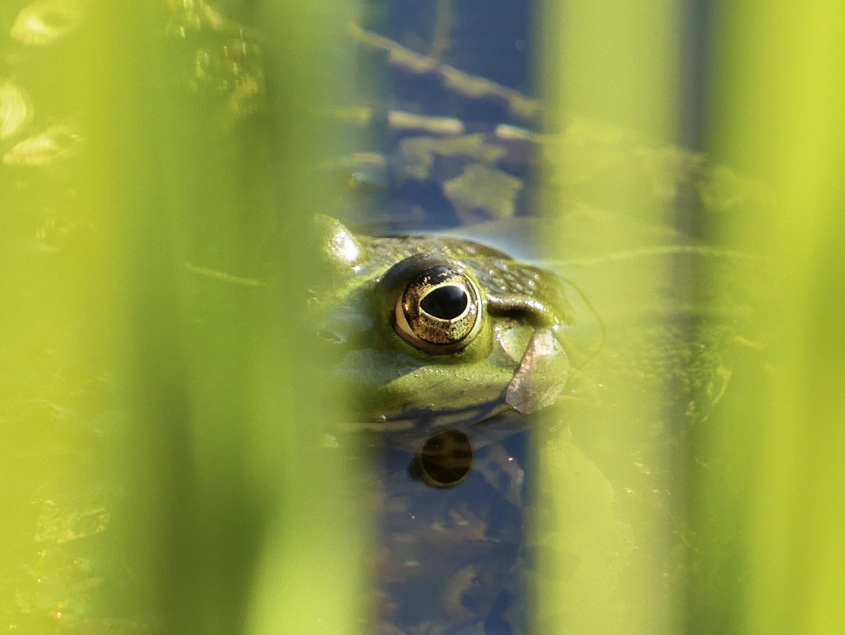 TOP 20: Ob der Frosch den Fotografen Florian Franke aus Selzen auch gesehen hat?