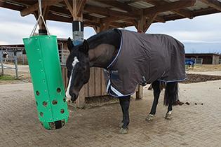 Brauchen Pferde eine Decke ?