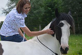 Vorurteile gegenüber der Bodenarbeit? Warum arbeiten wir unser Pferd vom Boden?