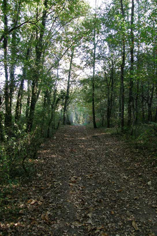 Forêts aux environs