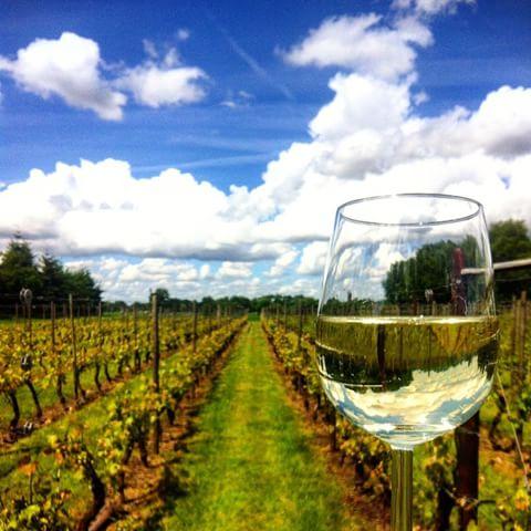 Asperge en wijnboerderij Santspuy Etten-Leur