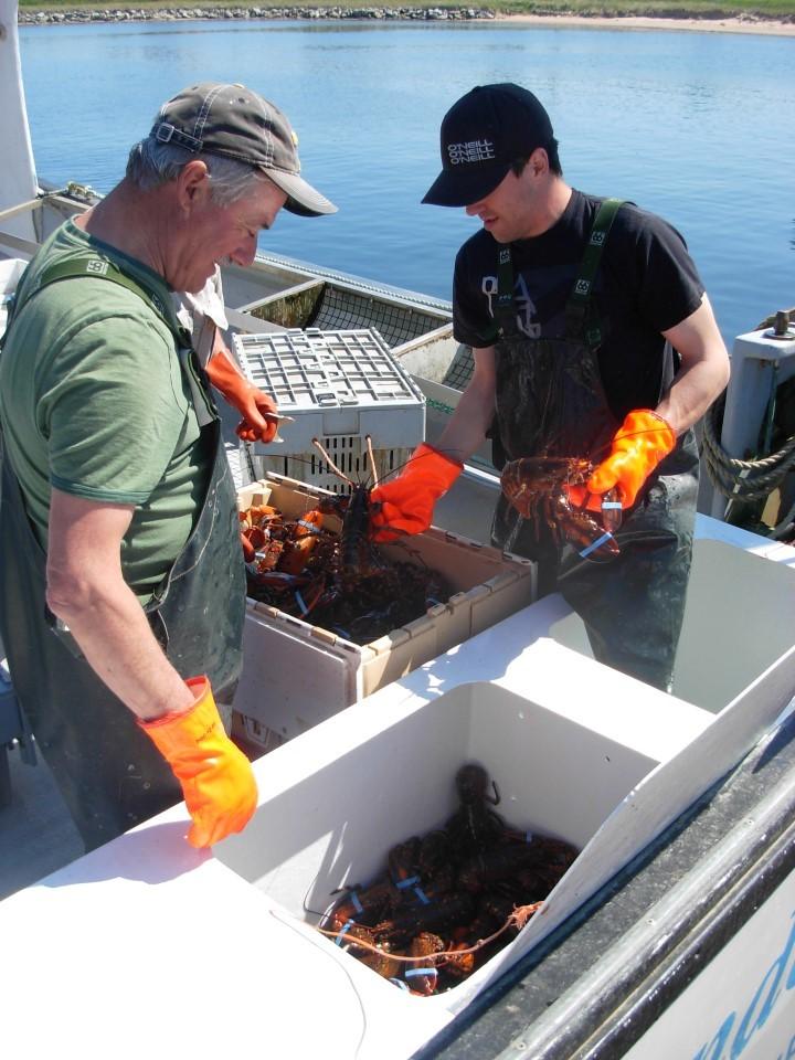 les pêcheurs de homard, les rares marins rencontrés sur l'eau, chaque jour