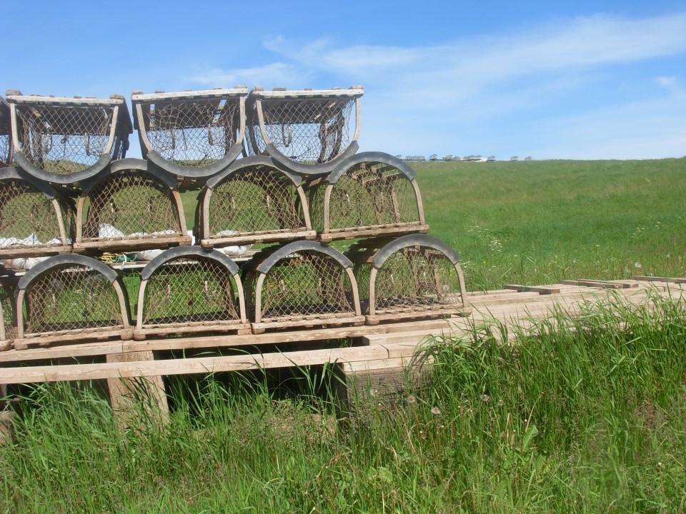 Les casiers à homard