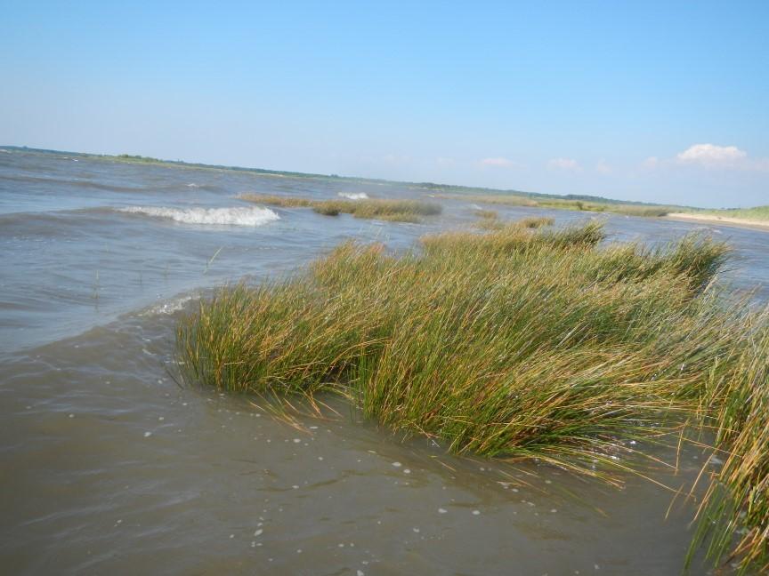 Premier échouage  : à la pointe du Teich