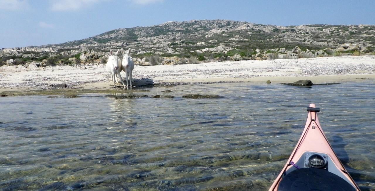 Les voilà ces ânes albinos, ayant donné leur nom à cette île et ce Parc naturel