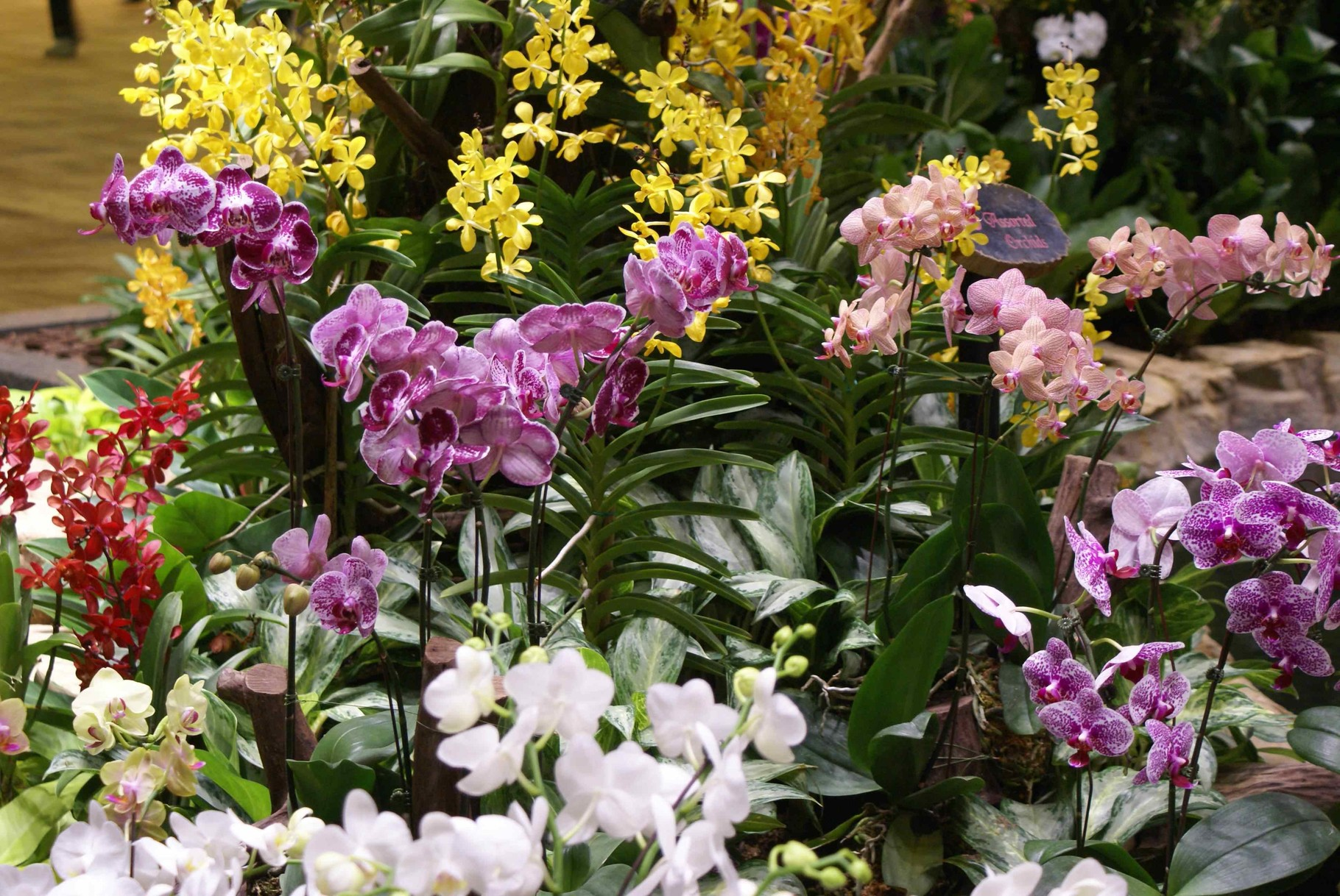 verschiedene Orchideen