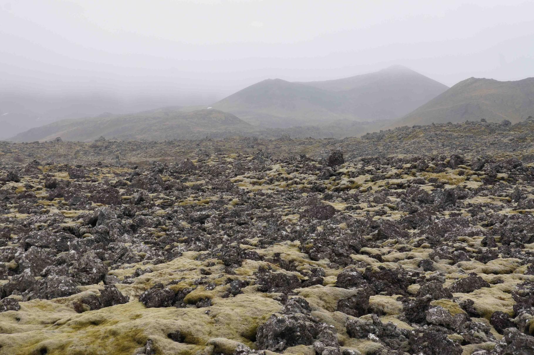 Moosbewachsenes Vulkangestein