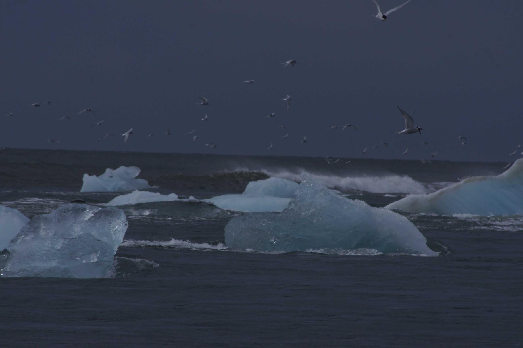 Gletschereis auf offener See bei Jökulsárlón