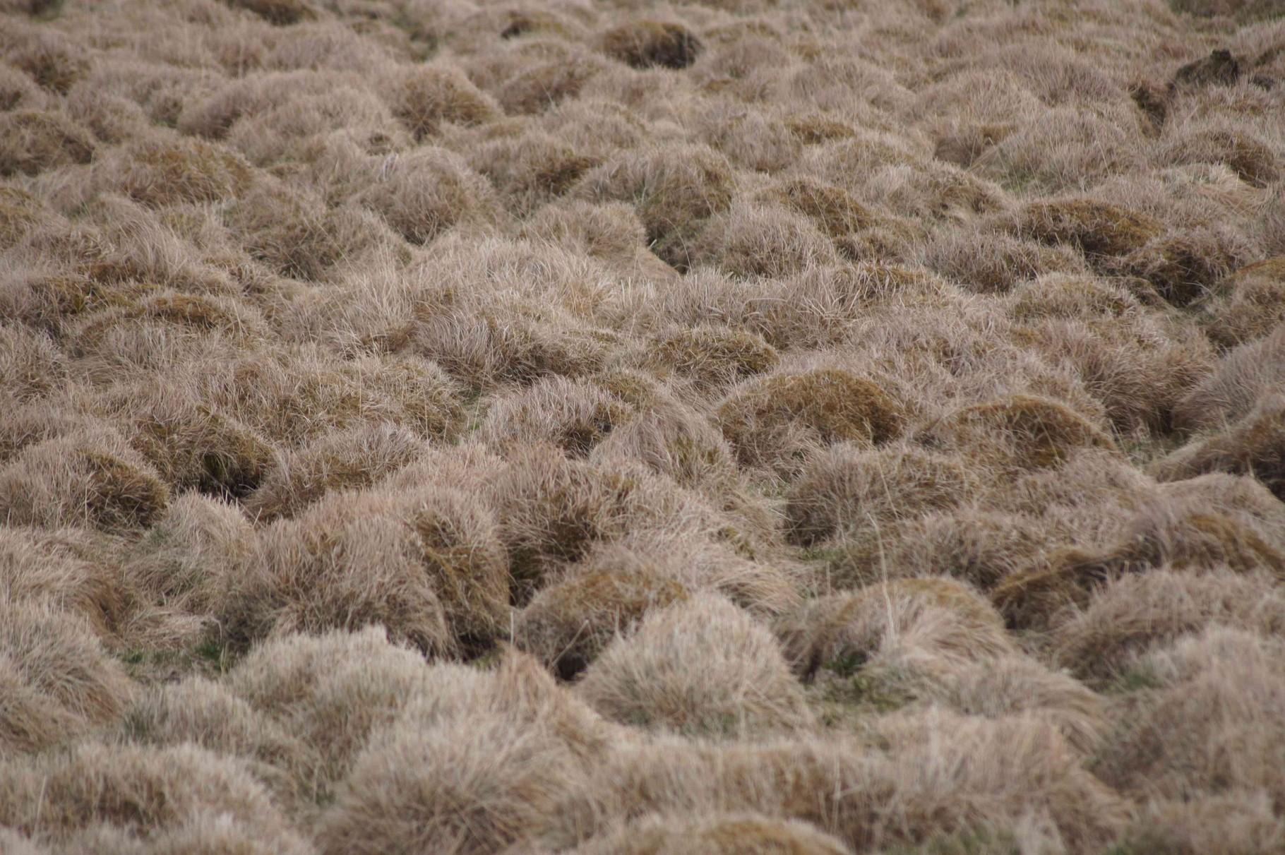 Grashügellanschaft