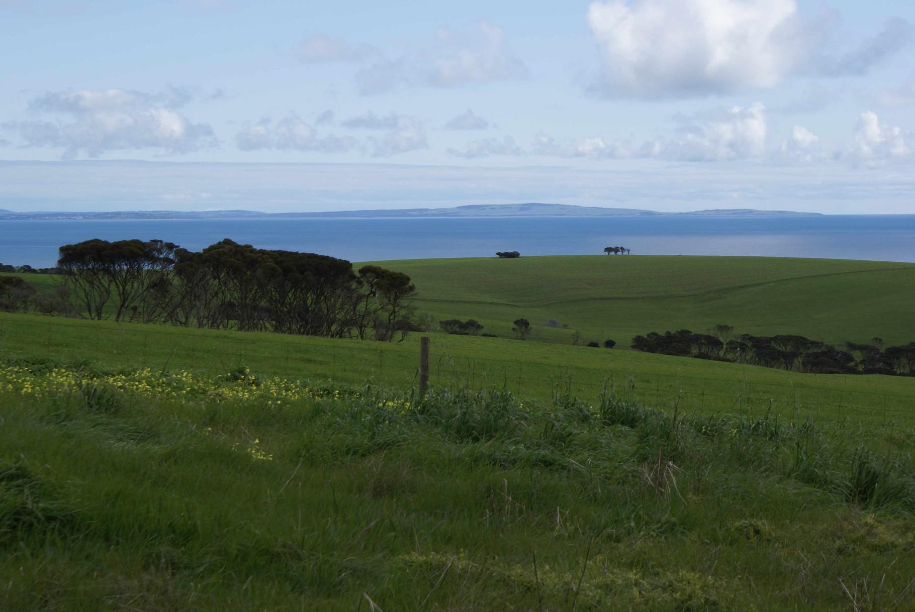 Auf Kanguru Island, South Australia