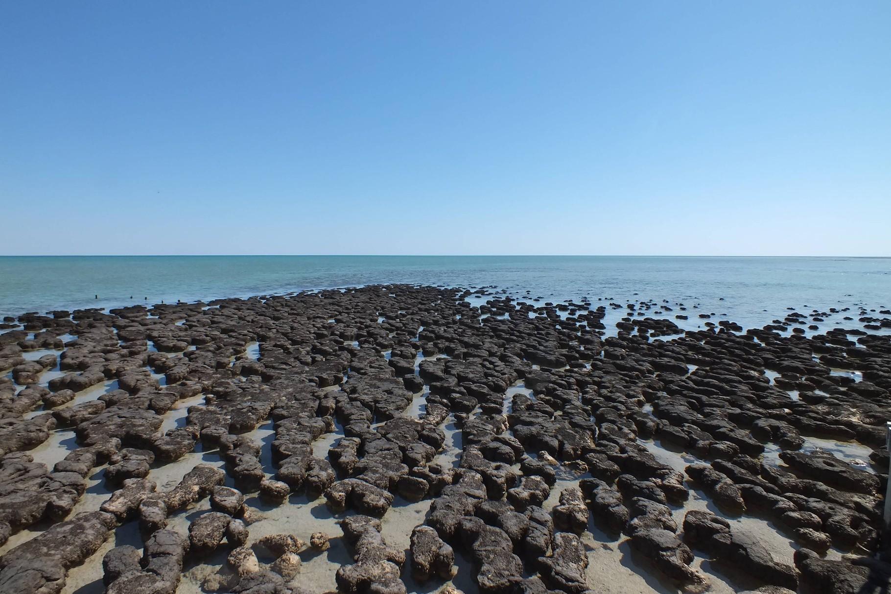 Stromalithen sind wachsende Steine