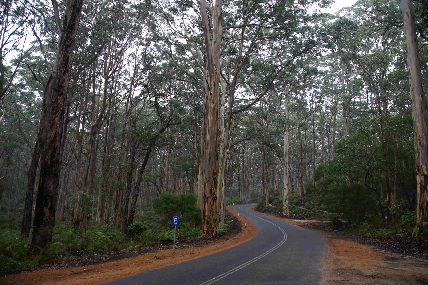 Fahrt durch den Eukalpytuswald in der Nähe von Margaret River, Wa