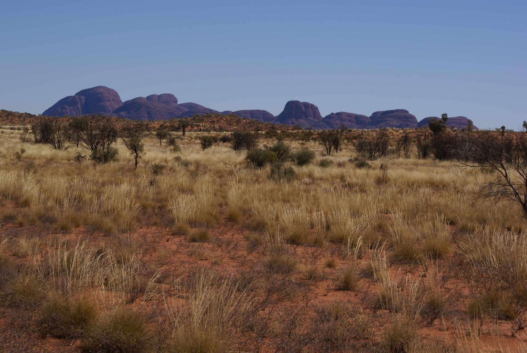 Kata Tjuta bzw. die Olgas im Northern Territory