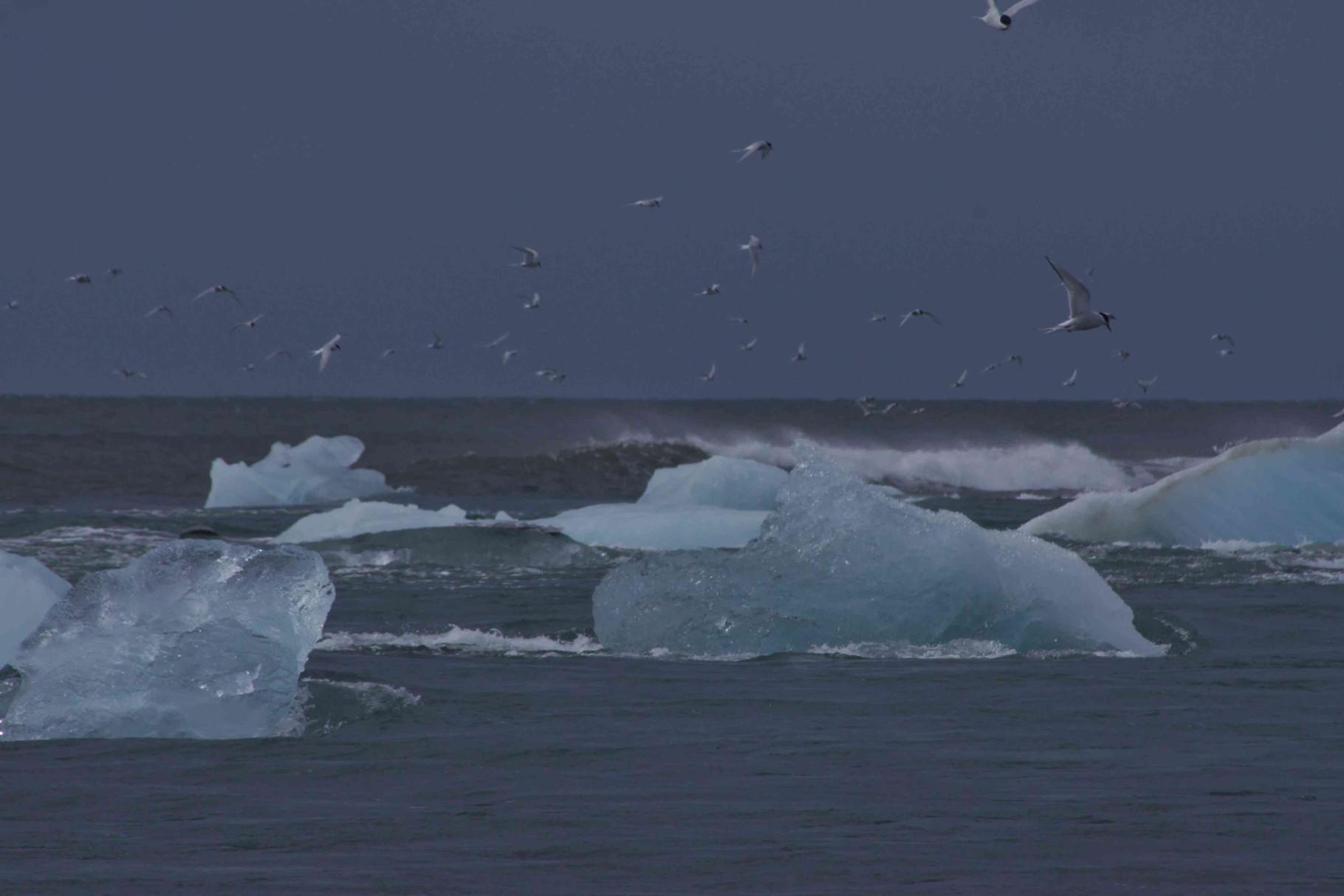 Eisschollen im Meer bei Jökulsarlón