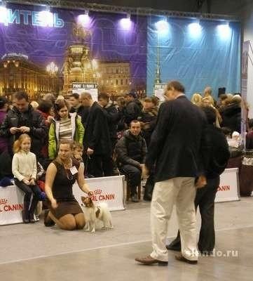 Хендлер, хендлинг, ищу хендлера, Санкт-Петербург