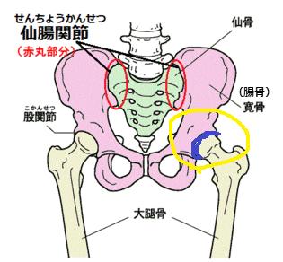 臼蓋の位置