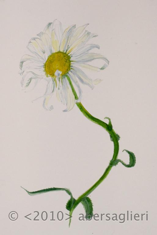 "Chrysanthemum, watercolor on paper, 7""x9"", 2010"