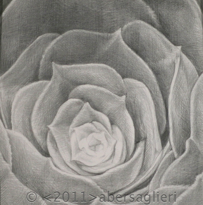 "Silver Succulent, silverpoint on paper, 5""x5"" 2011"
