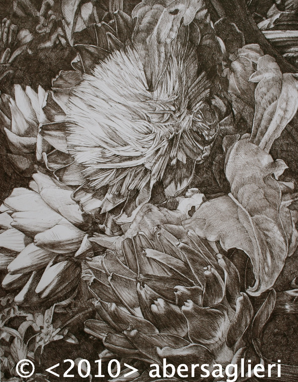 "Artichokes, ink on paper, 12""x16"" 2010"