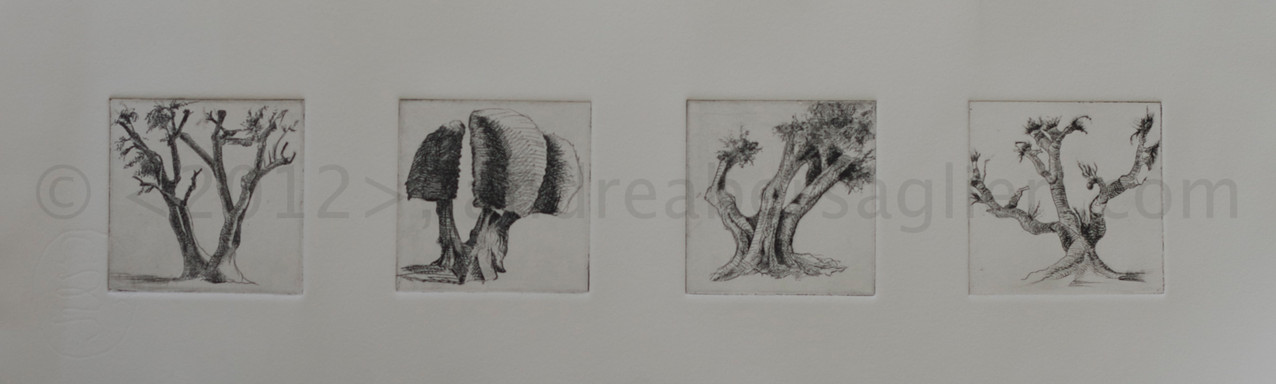 "4Olive Trees, 7x20"", Drypoint and Etching"