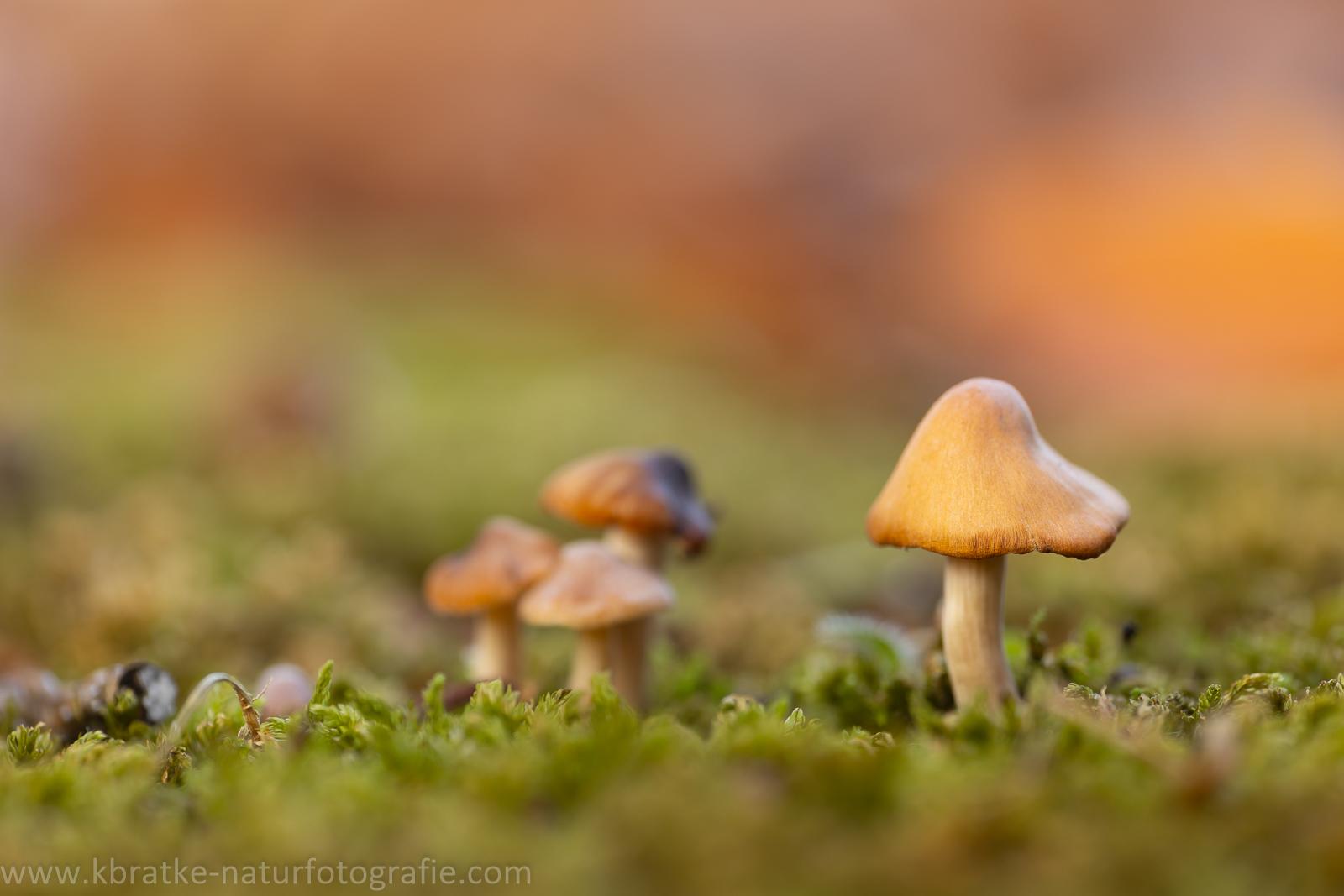 unbekannte Pilze (180mm f2.8)