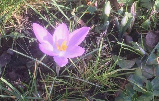 Que faire pour vivre un bon printemps ?