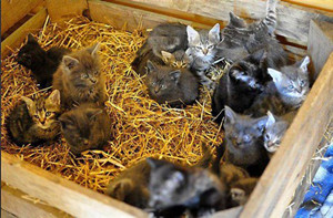 Abandon de chatons ...