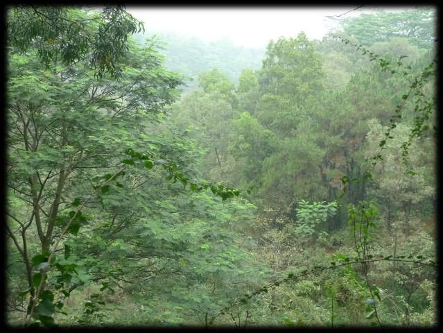 Dafu Shan - Mountain Park