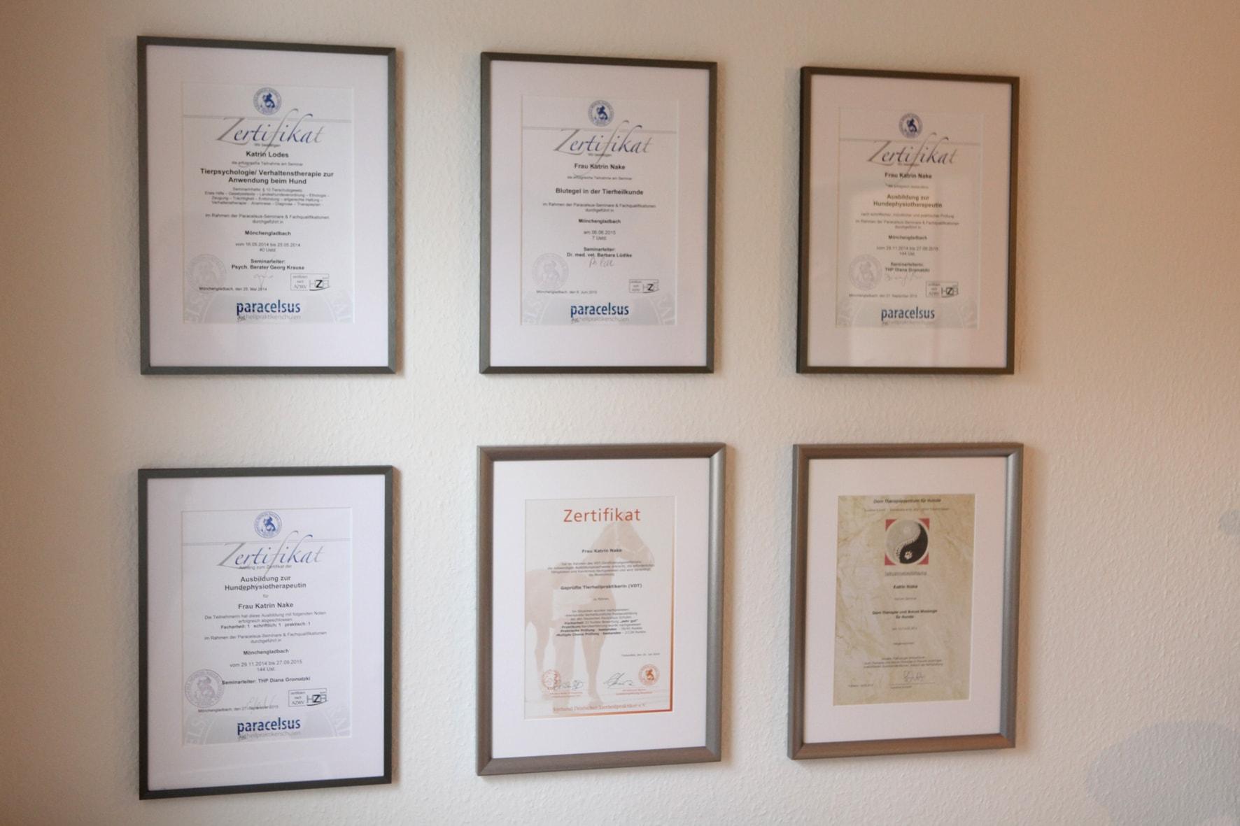 Hundephysiotherapie Zertifikate