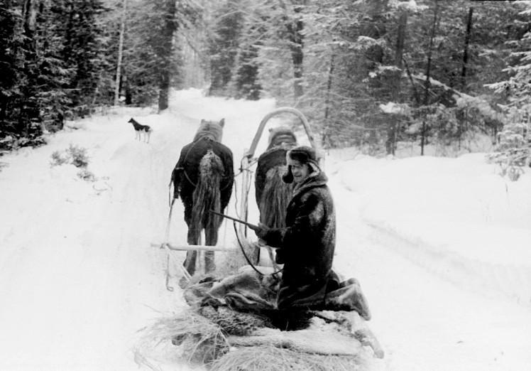 По таёжной, зимней дороге (санный путь) прадедов Вопиловых к их заимке Вопиловка (Королевка) февраль 1971 года.