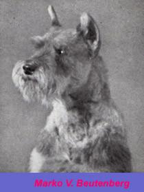 Fotografia del perro schnauzer Marko V. Beutenberg