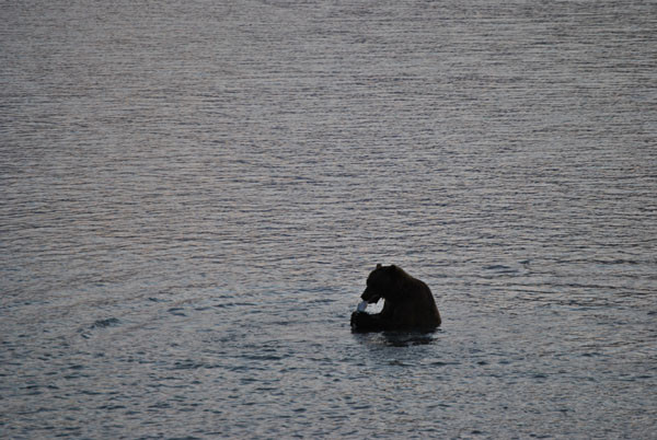 Alaska Bärenbeobachtung - picture Mario Möbius