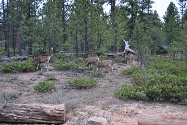 die Tiere auf dem Campingplatz